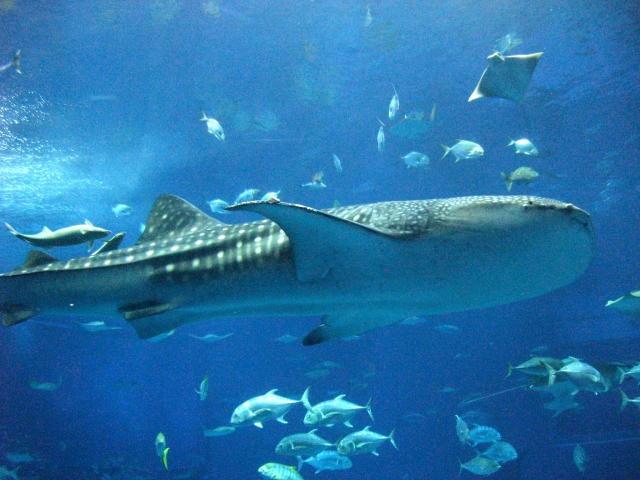 美ら海(ちゅらうみ)水族館の写真