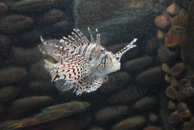 越前松島水族館イメージカット