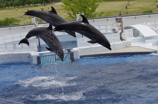 京都水族館のイメージ写真