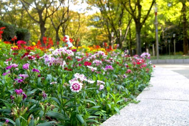 レオマ花ワールドイメージ